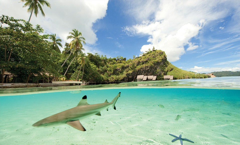 Misool Eco Resort Shark Destination Deluxe