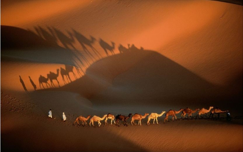 Earth From Above Camels Yann Arthus Bertrand Destination Deluxe