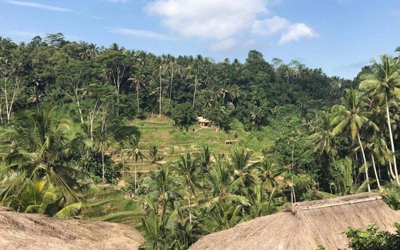Bali Travel Guide Tegallalang Rice Terraces - Destination Deluxe