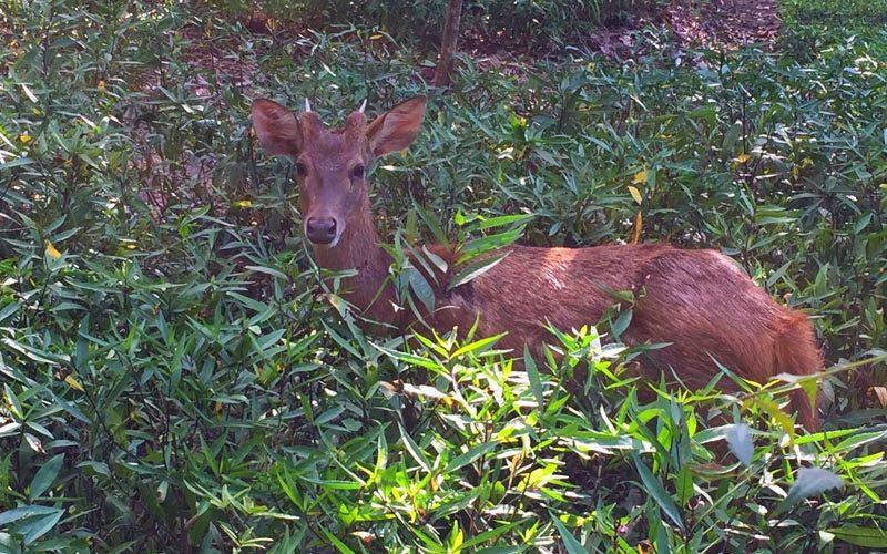 The Menjangan Deer - Destination Deluxe