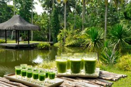 The Farm at San Benito Wheatgrass - Destination Deluxe