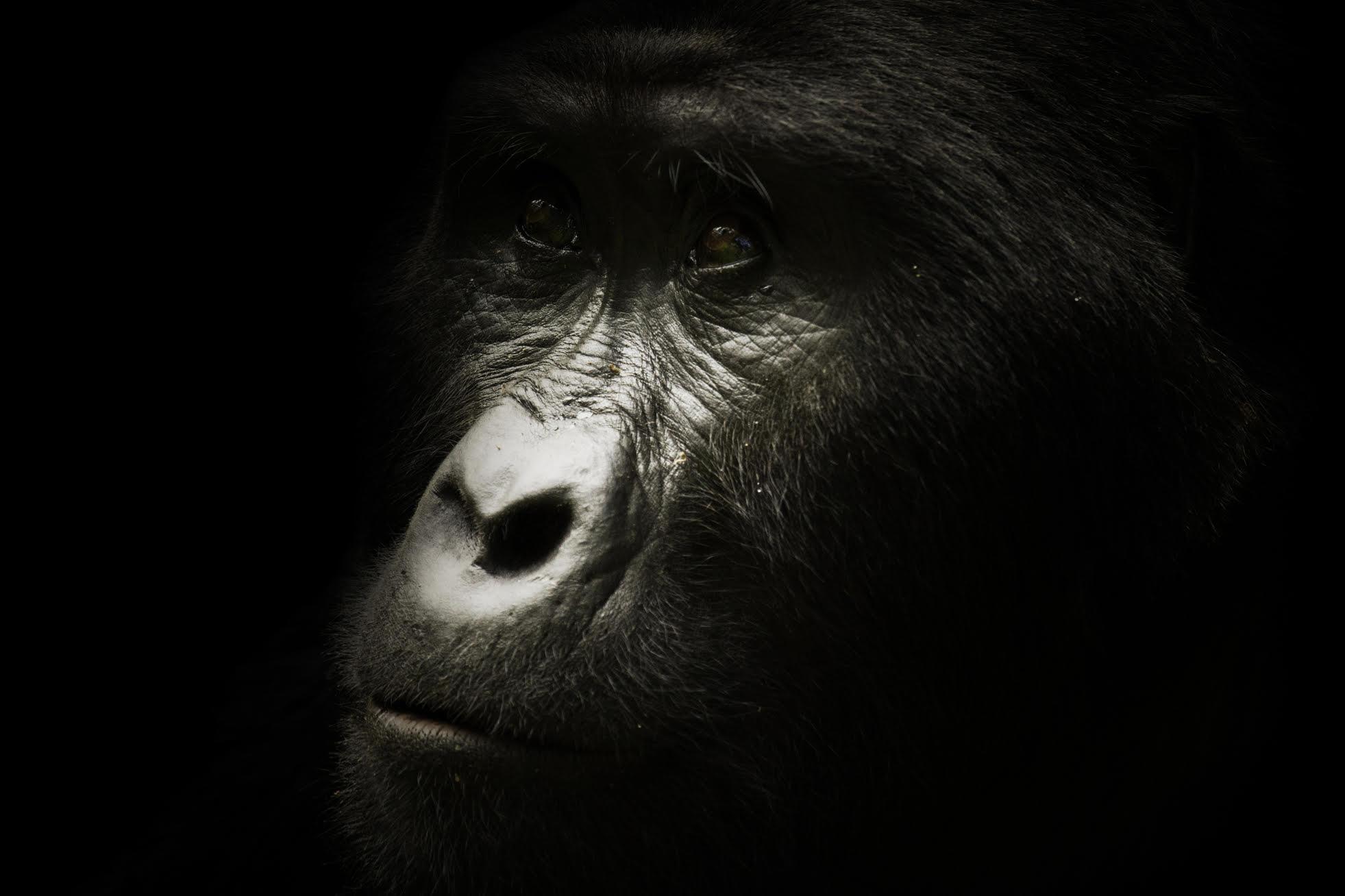 2018 Bucket List Uganda-Gorillas-Blueflower-Travel-Destination-Deluxe