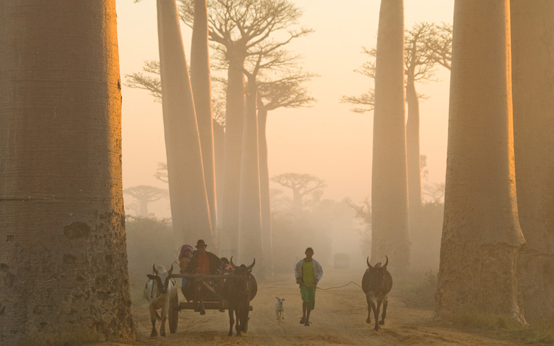 Baobab Avenue Journeys by Chance - Destination Deluxe