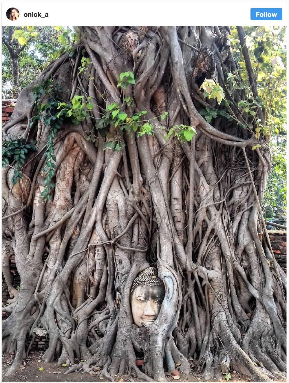 Wandersnap Buddha Head Ayutthaya - Destination Deluxe