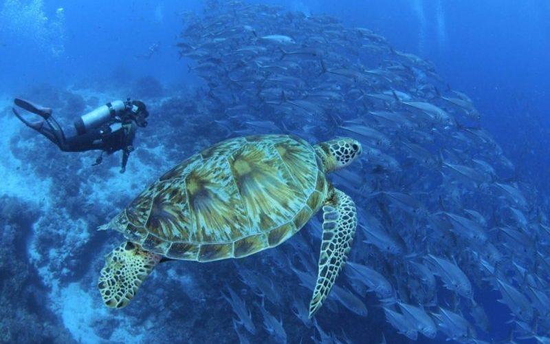 Diving Bohol - Destination Deluxe