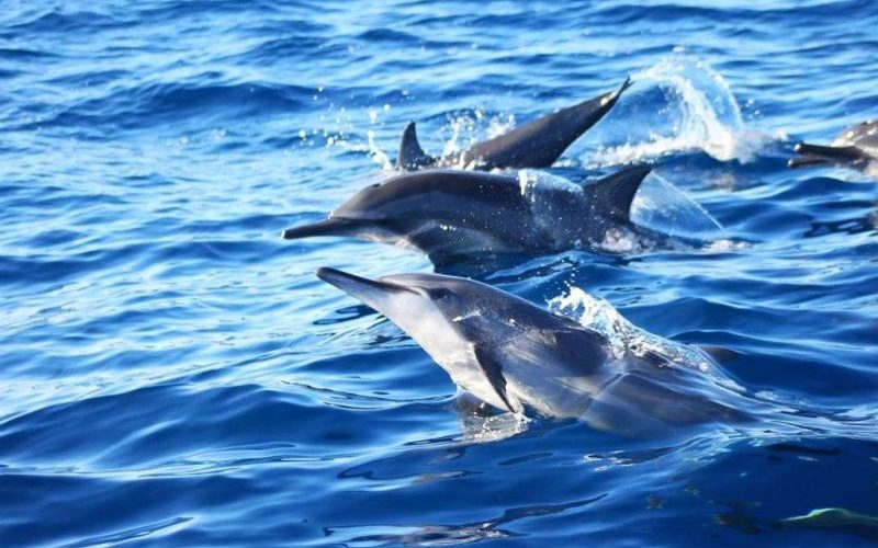 Dolphin Watching Bohol - Destination Deluxe