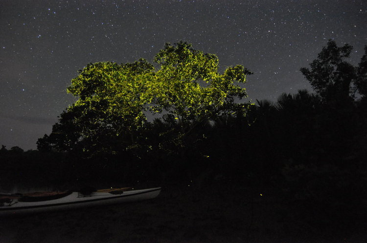 Firefly Kayaking Bohol - Destination Deluxe