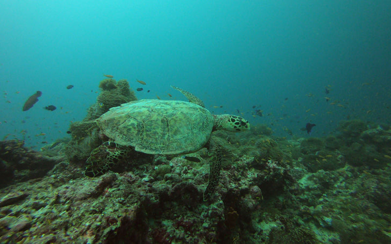Diving Maldives - Destination Deluxe