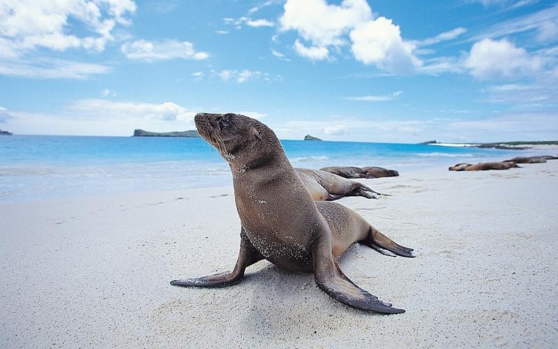 Galapagos - Destination Deluxe