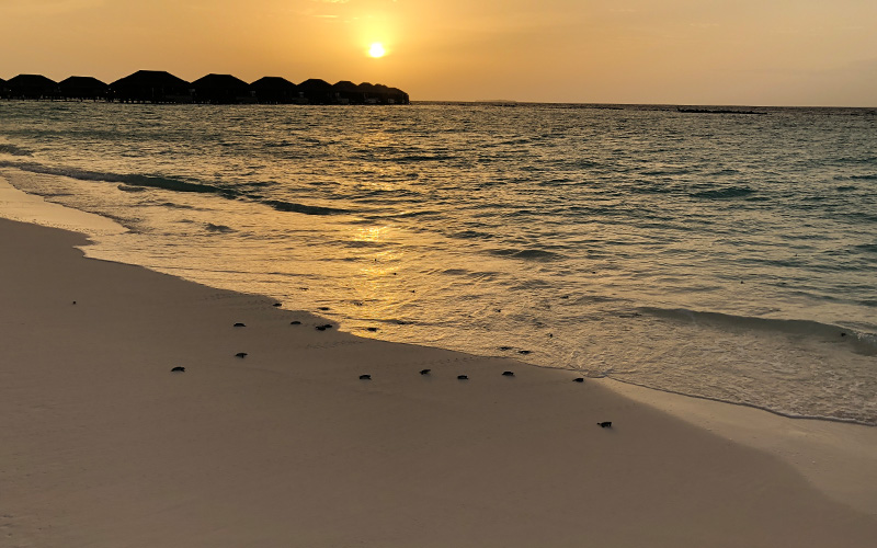 Turtle Release Velaa Private Island Maldives - Destination Deluxe