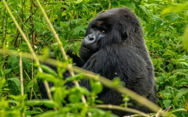Gorillas Rwanda 2020 Bucket List Destination - Destination Deluxe