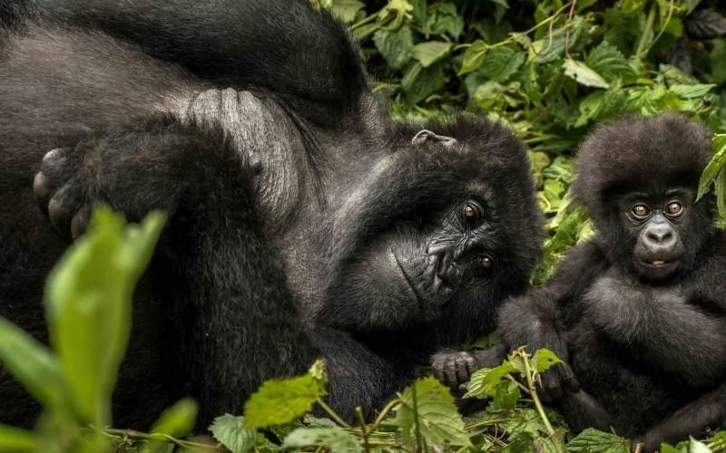 Rwanda Gorillas Bucket List - Destination Deluxe