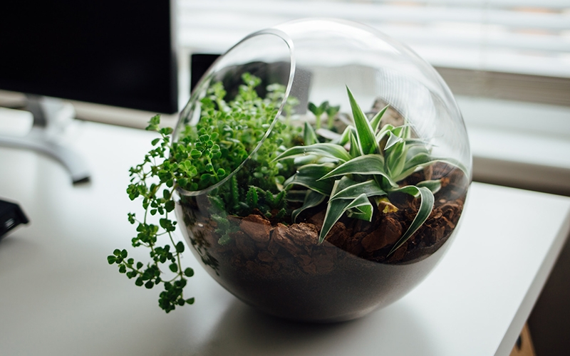 Terrarium Indoor Gardening - Destination Deluxe