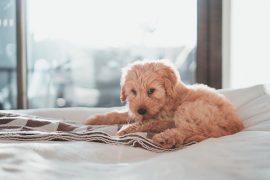 Pet-Friendly Hotels - Destination Deluxe