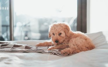 Pet-Friendly Hotels - Destination Deluxe