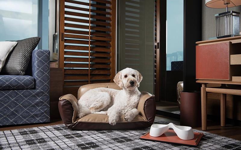 Rosewood Hong Kong Pet-Friendly Hotels - Destination Deluxe