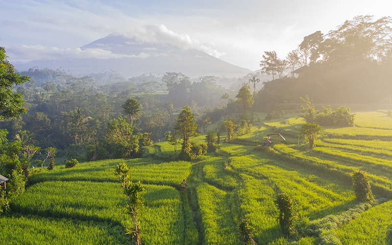 Best Wellness Retreats in Bali - Destination Deluxe