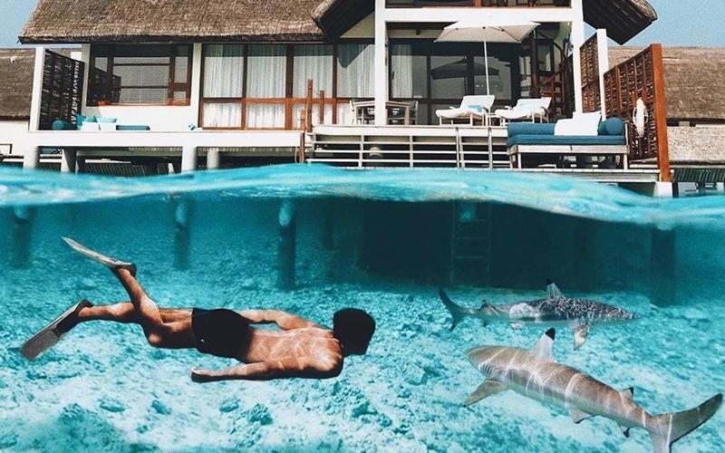 Four Seasons Maldives Whale Sharks - Destination Deluxe