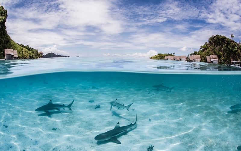 Misool Resort Raja Ampat Swim with Sharks - Destination Deluxe