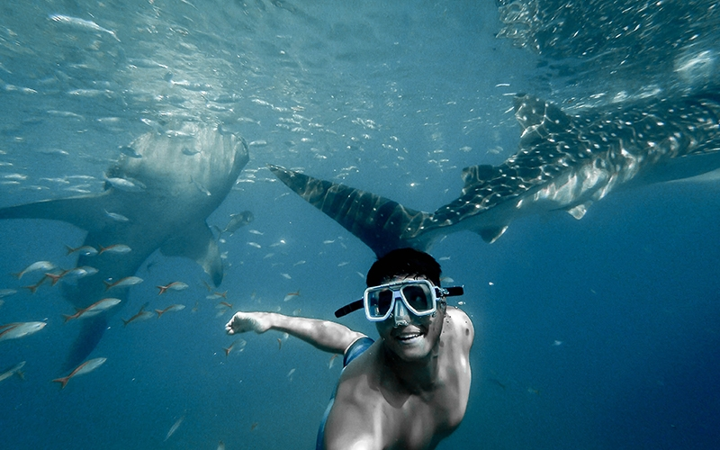 Palawan Swimming with Whale Sharks - Destination Deluxe