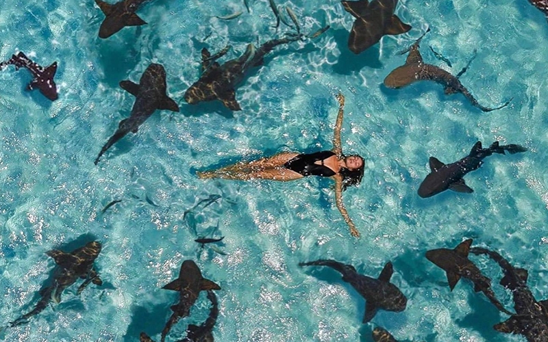 Swim with Sharks Bahamas - Destination Deluxe_