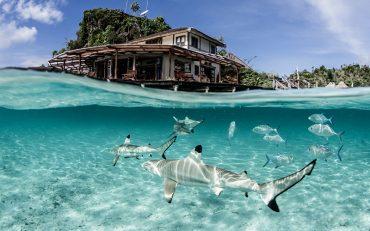 Swim with Sharks Shawn Heinrichs Misool Resort - Destination Deluxe_