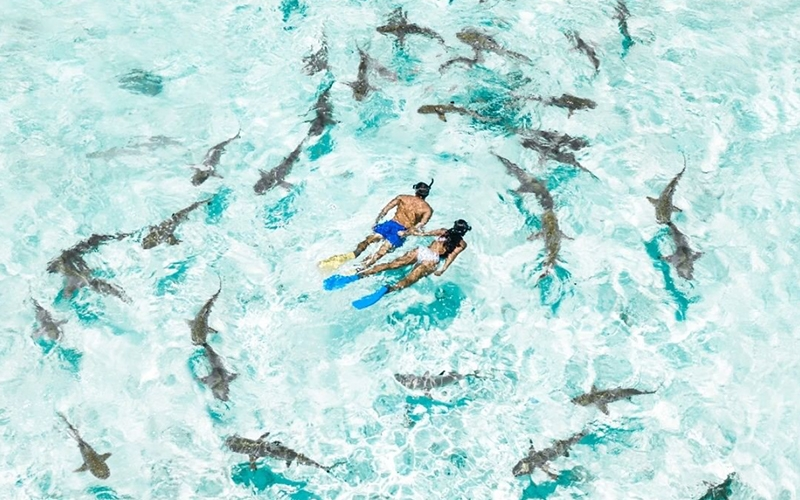 Swims with Sharks French Polynesia - Destination Deluxe