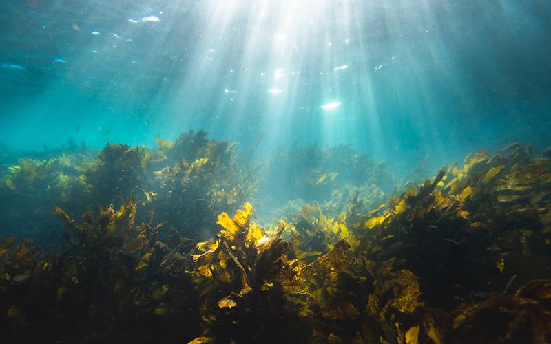 Health Benefits of Seaweed - Destination Deluxe