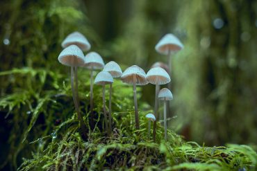 Psilocybin Magic Mushrooms Entheogen Plant Medicine - Destination Deluxe