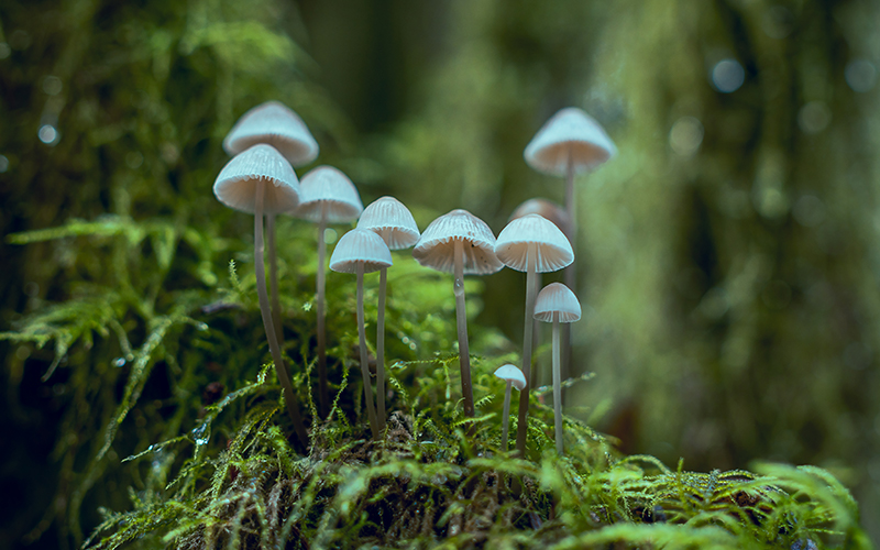 Psilocybin Magic Mushrooms Entheogen Plant Medicine - Destination Deluxe
