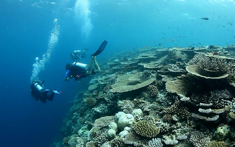 Maldives Diving Gili Lankanfushi - Destination Deluxe