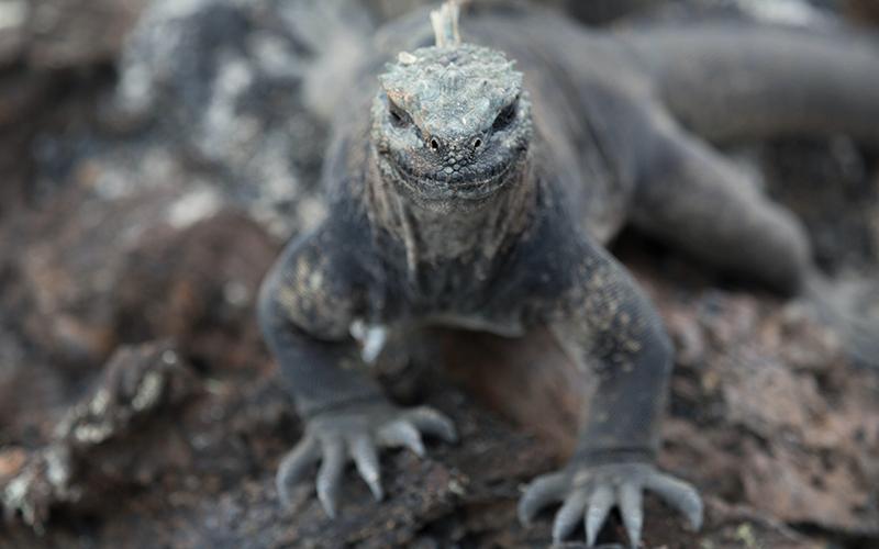 Bucket List Galapagos - Destination Deluxe