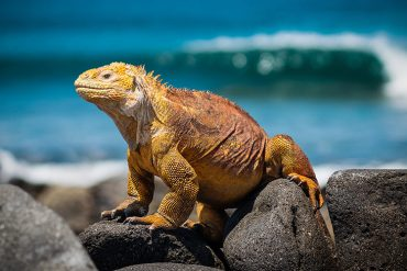 Bucket List Once in a Lifetime Galapagos - Destination Deluxe