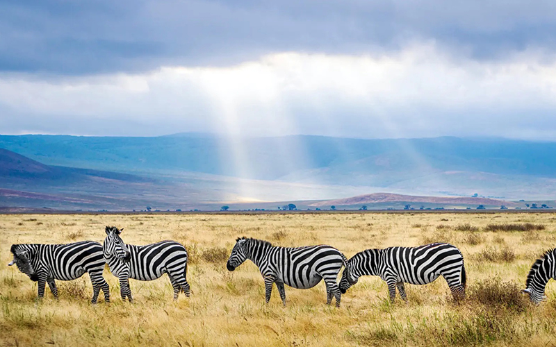 Africa Travel Voyemo Next Vacation - Destination Deluxe
