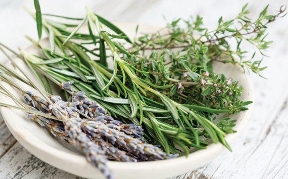 Benefits of Herbs - Destination Deluxe