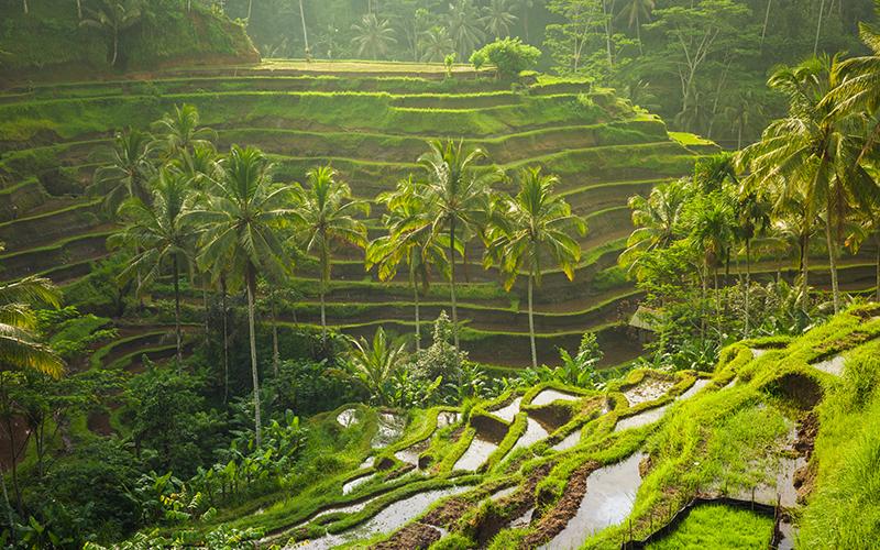 Bali The Asa Maia - Destination Deluxe