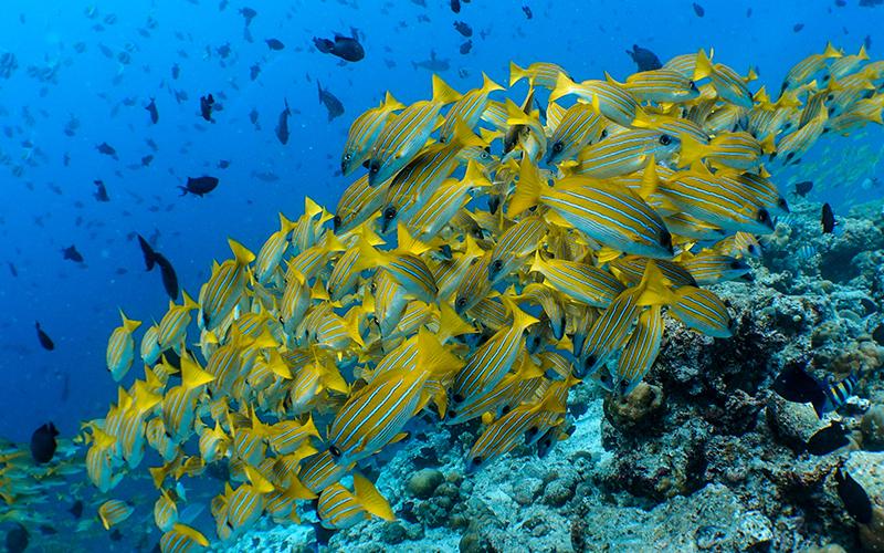 Amilla Maldives Diving - Destination Deluxe
