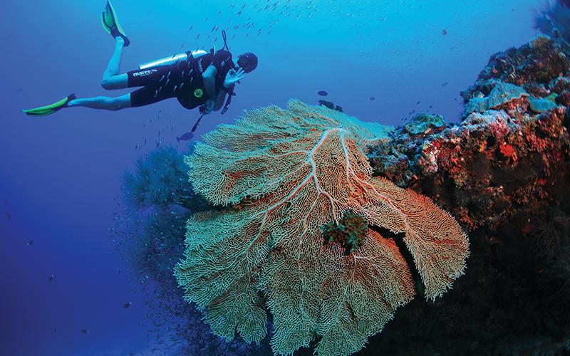 Amilla Maldives Watersports Diving - Destination Deluxe