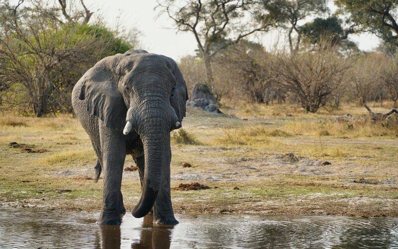 Botswana Honeymoon Destinations - Destination Deluxe